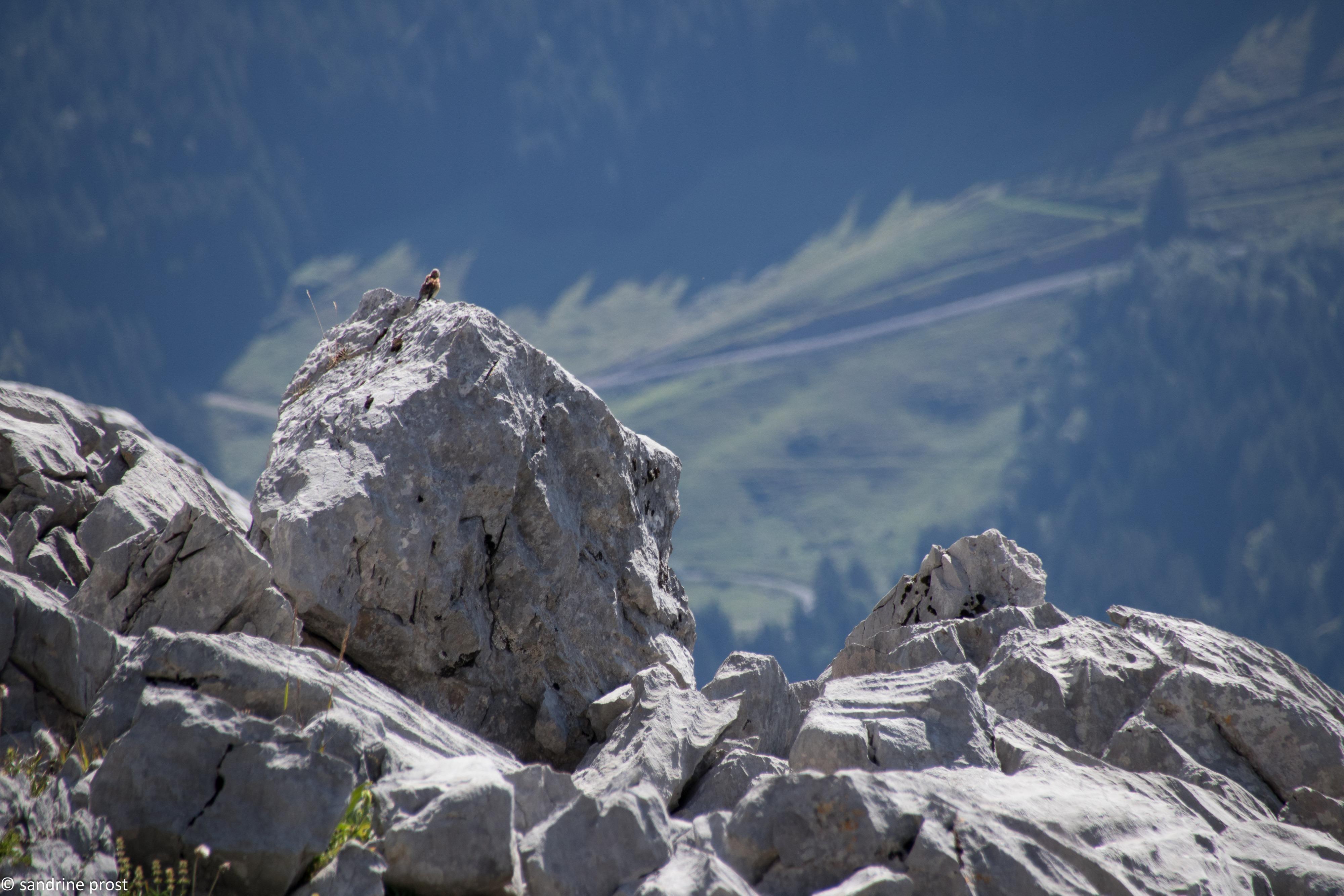 Lac de Peyre Sandrine Prost 1