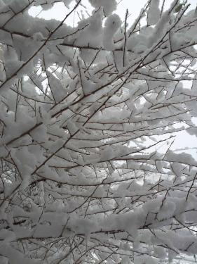Sp formation neige2 011217